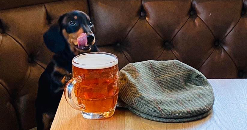A dog drinking a pint of beer with a flat cap