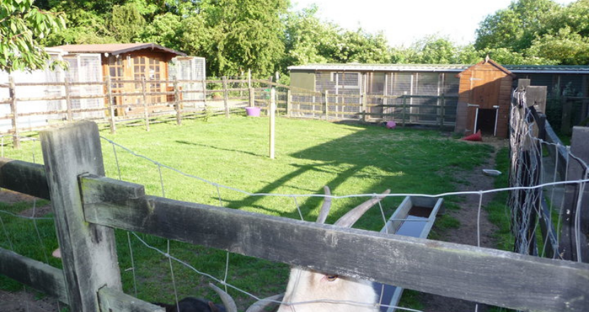 Field Cottage Cattery