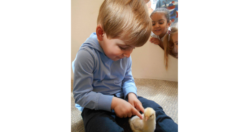 child with duckling