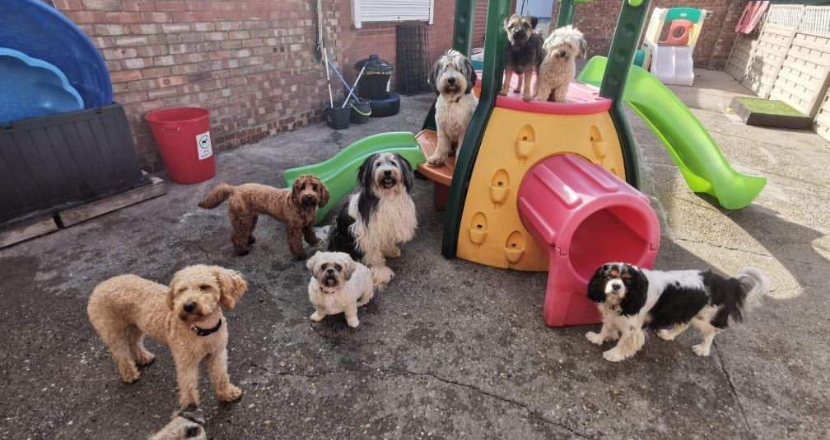 dogs at the doggie daycare